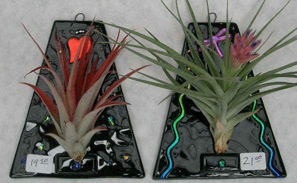 Sierra Glassworks Lucky Bamboo And Bromeliad Plants